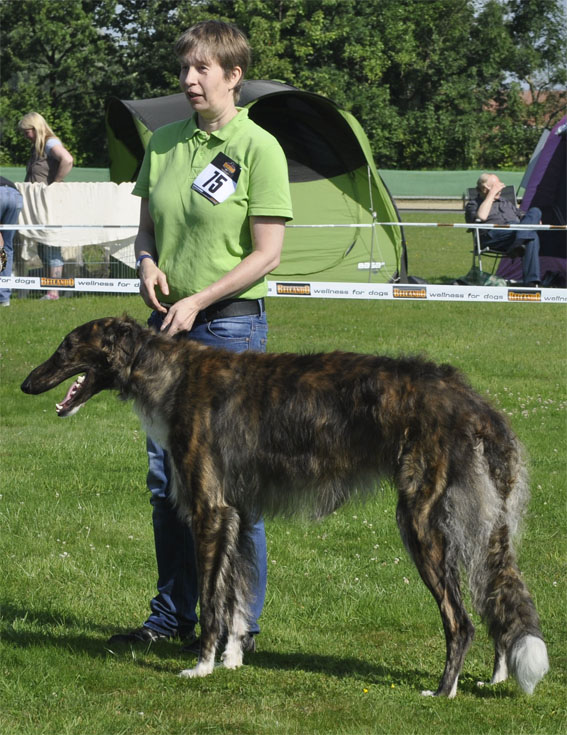 Borzois at CAC Münster/D 22/08/15 Xanishka Borzoi